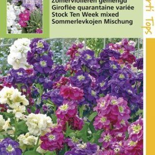 Matthiola incana (zaad Zomerviolieren kleurenmengsel)