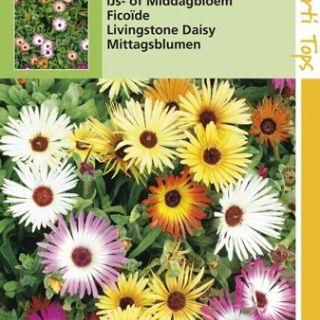 Mesembryanthemum criniflorum (zaad IJsbloem, middagbloem, Dorotheanthus)