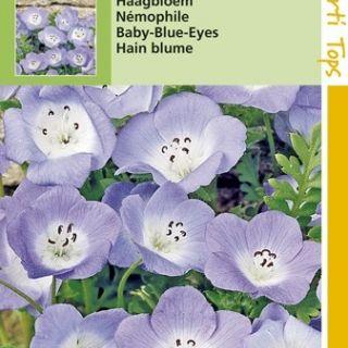 Nemophila insignis (zaad Haagbloem, Bosliefje)