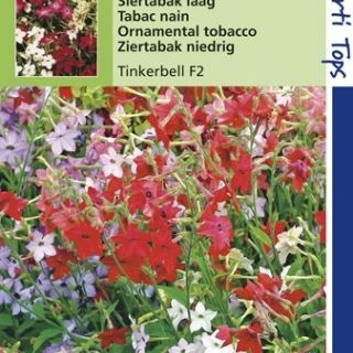 Nicotiana alata Tinkerbell (zaad Siertabak, hybride mengsel)