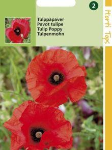 Papaver glaucum (zaad Tulppapaver, rood met vlek)
