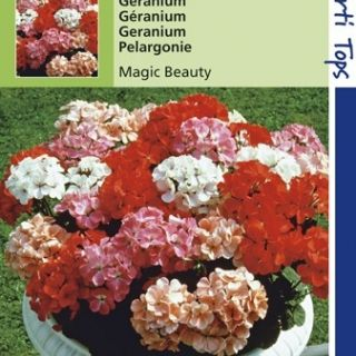 Pelargonium Magic Beauty (f1 hybride zaad, gemengde geranium)