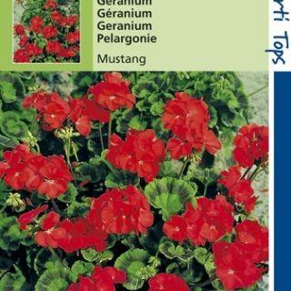 Pelargonium Mustang (f1 hybride zaad, Kersrode geranium)