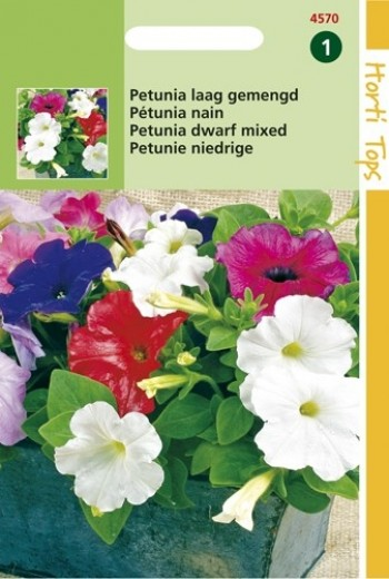 Petunia nana compacta (zaad laag kleurenmengsel)