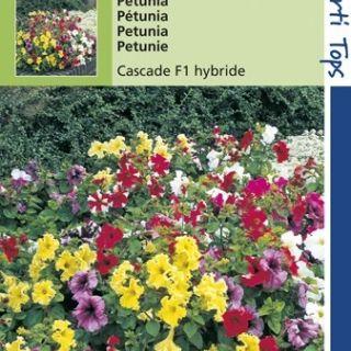Petunia pendula Cascade (F1 hybride zaad, Hangpetunia, gemengd)