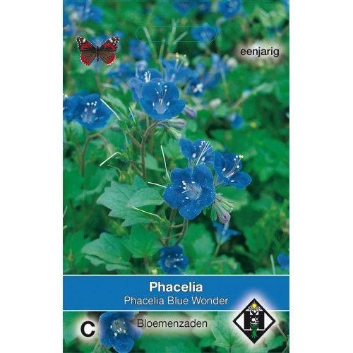 Phacelia campanularia Blue Wonder (zaad bijenvoer)