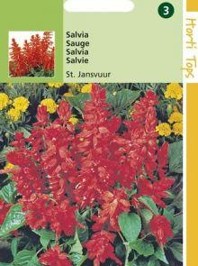 Salvia splendens (zaad Braziliaanse vuursalie, St. Jansvuur)