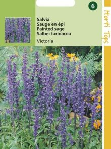 Salvia farinacea Victoria (zaad Meelsalie, Blauwe salvia)