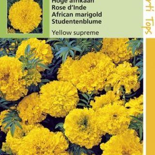 Tagetes erecta Yellow Supreme (zaad hoge Afrikaan grootbloemig geel)