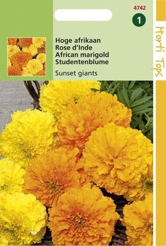 Tagetes erecta Sunset Giants (zaad hoge dubbelbloemige Afrikaan)