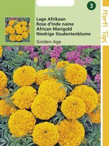 Tagetes erecta nana Golden Age (zaad laagblijvende Afrikaantje)