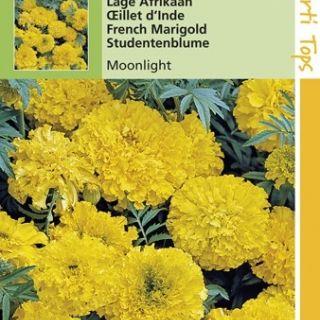 Tagetes erecta Moonlight (zaad laagblijvend Afrikaantje, kanariegeel)