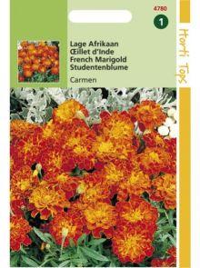 Tagetes patula nana Carmen (zaad laagblijvende Afrikaan, roestbruine met gele bloemen)