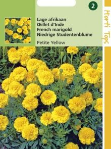 Tagetes patula nana yellow boy (zaad laagblijvende Afrikaan met kanariegele bloemen)