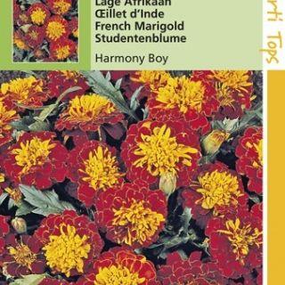 Tagetes patula nana harmony boy (zaad Afrikaan met oranje roodbruine bloemetjes)