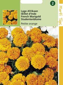 Tagetes patula nana Orange Boy (zaad Lage Petite Afrikaan, helder oranje bloemen)