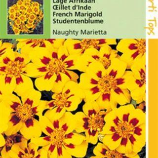 Tagetes patula nana Naughty Marietta (zaad laagblijvende oranjegele Afrikaan)