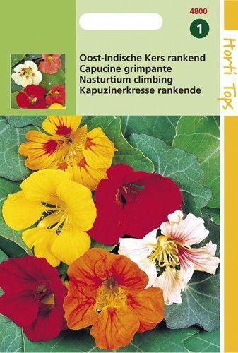 Tropaeolum majus (zaad Oost-Indische Kers,enkelbloemig gemengde kleuren)