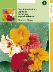 Tropaeolum majus Glorious Gleam (zaad Oost-Indische Kers dubbelbloemig mengsel)
