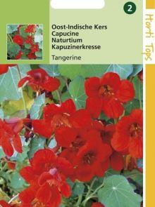 Tropaeolum majus nanum Empress of India (zaad Oost-Indische Kers, enkelbloemig rood)