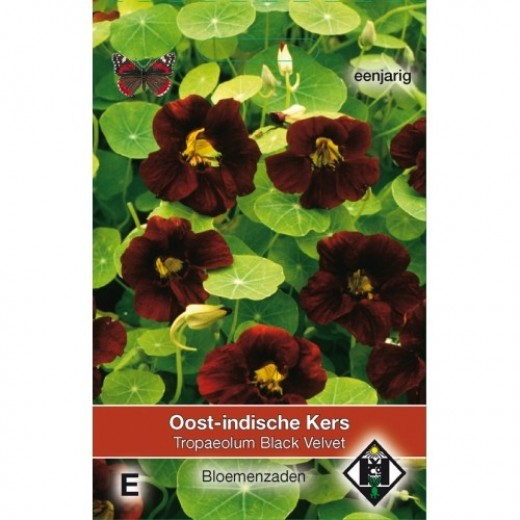 Tropaeoleum majus nanum Black Velvet (zaad Oost-indische kers, donkerrode, bijna zwarte bloemen)