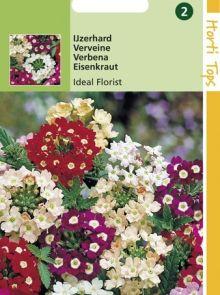 Verbena hybrida Ideal Florist (zaad lage IJzerhard met gemengde kleuren)