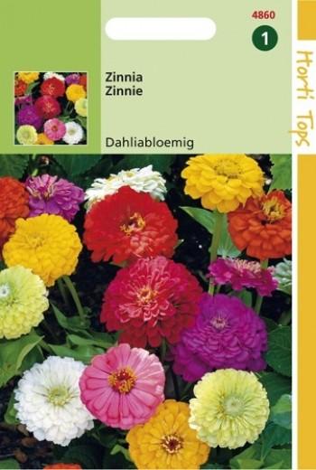 Zinnia elegans (zaad Dahliabloemig mengsel)