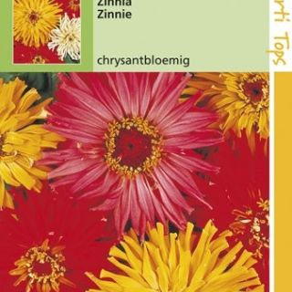 Zinnia elegans Chrysanthbloemig (zaad Zinnia mengsel)