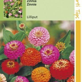 Zinnia elegans Lilliput (zaad pompon-zinnia's)