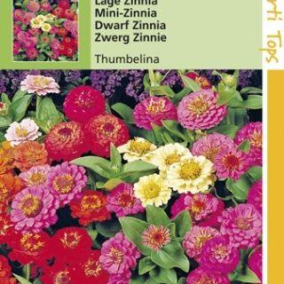Zinnia elegans Thumbelina (zaad lage mini Zinnia mengsel met pasteltinten)