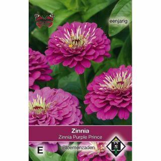 Zinnia elegans Purple Prince (zaad dieppaarse Zinnia)