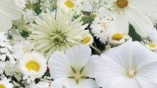 Bloemenmengsels (o.a. op kleur)