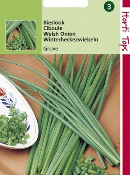 Bieslook grove (zaad allium)
