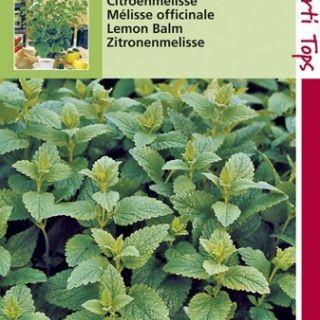 Citroenmelisse (zaad Melissa officinalis)