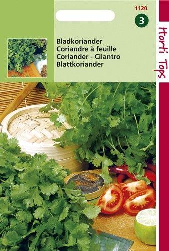 Koriander (zaad bladkoriander)