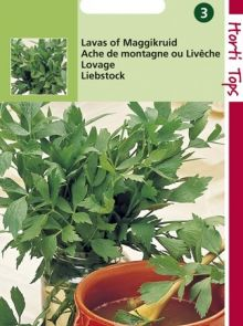 Lavas of Maggikruid (zaad Levisticum officinalis)