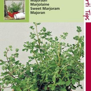 Majoraan (zaad Origanum majorana)