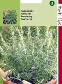 Rozemarijn (zaad Rosmarinus officinalis)