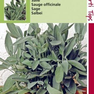 Salie (zaad Salvia officinalis)