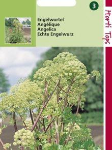 Engelwortel (zaad Angelica, 11070)