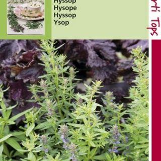 Hysop (zaad Hyssopus officinalis, 11090)