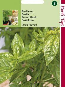 Basilicum grove (zaad)