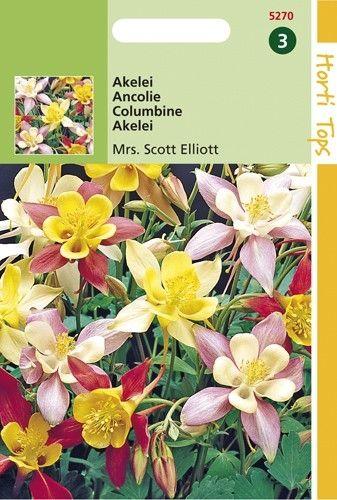 Aquilegia hybrida Mrs. Scott Elliot (zaad Akelei, gemengd)