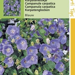 Campanula carpatica Blauw (zaad Karpatenklokje)