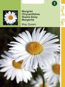 Chrysanthemum leucanthemum May Queen (zaad Margriet)