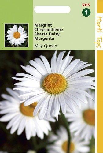 Chrysanthemum leucanthemum May Queen (zaad Margriet)