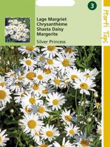 Chrysanthemum leucanthemum Silver Princess (zaad Lage Margriet)