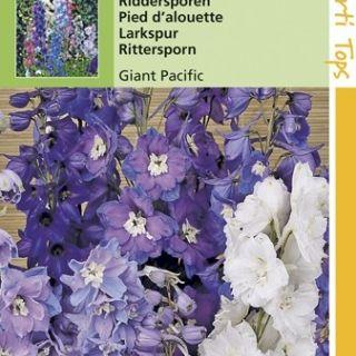 Delphinium cultorum Giant Pacific (zaad meerjarige Riddersporen)