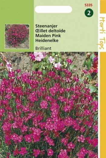 Dianthus deltoides Brilliant (zaad Steenanjer)