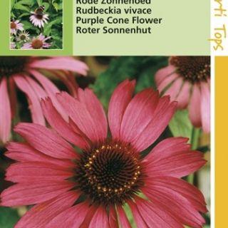 Echinacea purpurea (zaad Rode Zonnehoed)
